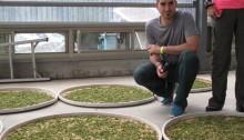 Félix viendo fermentar el té oolong