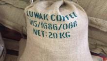 Saco de Kopi Luwak