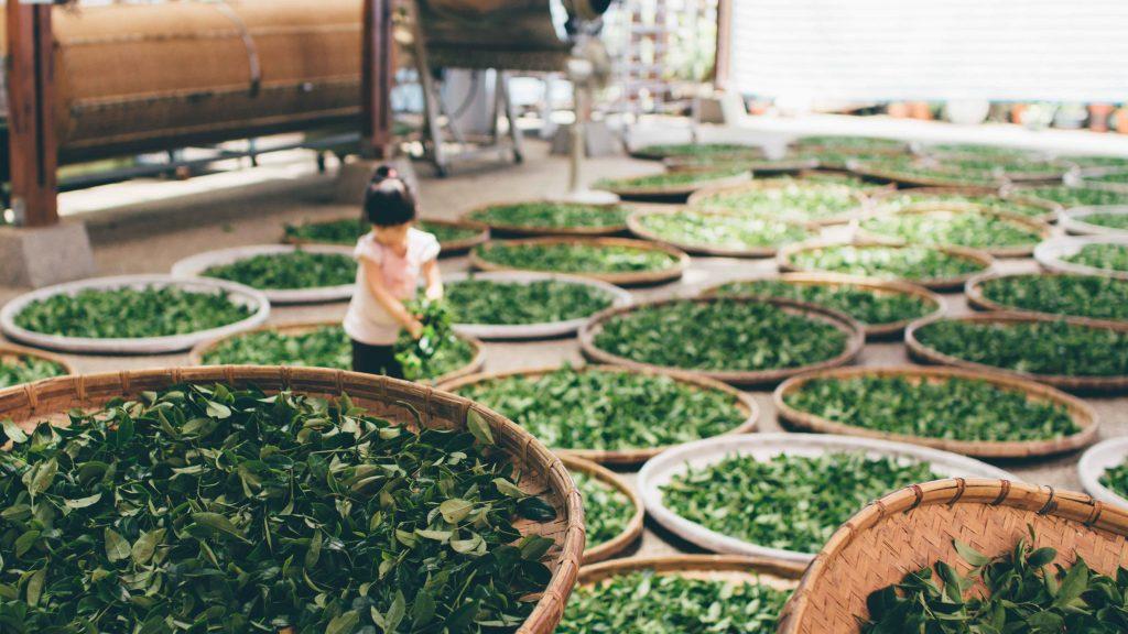 tomar té, té verde, rooibos, propiedades del té verde, té oolong, té blanco, pexels